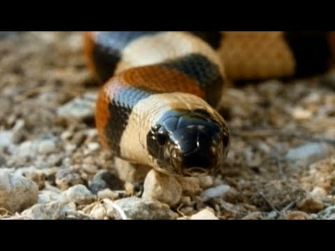 Secret Nature - Facts About Snakes  | S01E01 | Snake Documentary | Natural History Channel
