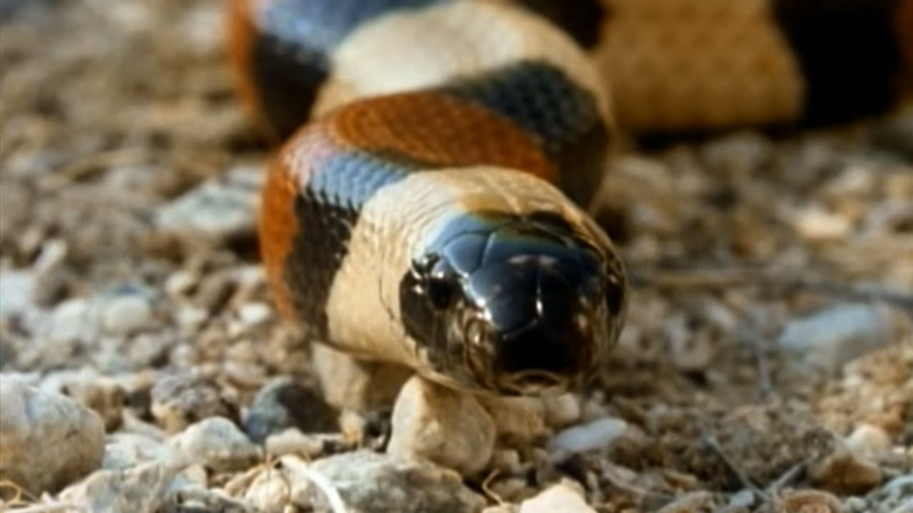Secret Nature - Facts About Snakes
