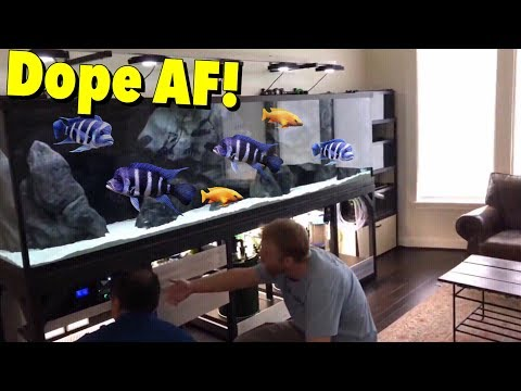 "MASSIVE CUSTOM MADE ""HOME AQUARIUM"" FOR BIG CICHLID FISH, CRAZY!"