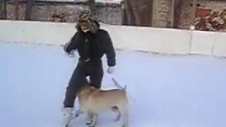 Feestyle with labrador - ZOOHOUS.RU