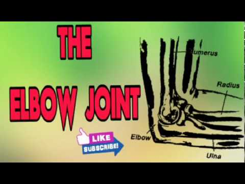 The Anatomy Of Elbow Joint Powerpoint Presentation Youtube