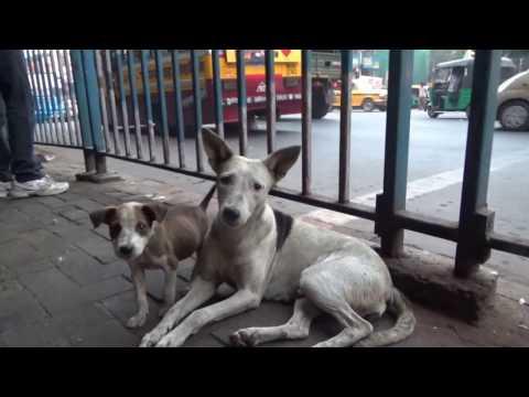 Memory Kolkata Park Street, Visit India