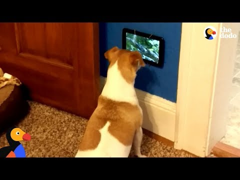 Dog Is So Excited To Get Her Own TV | The Dodo