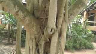 Территория  отеля  Botany Beach Resort Ботани Бич Резорт  Паттайя