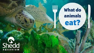Sea Curious: What Do Animals Eat?