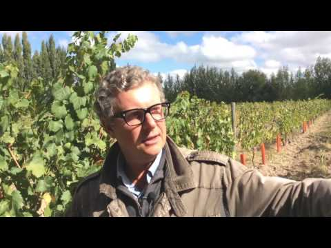 Patagonia's wines & the potential of Río Negro valley with winemaker Hans Vinding Diers