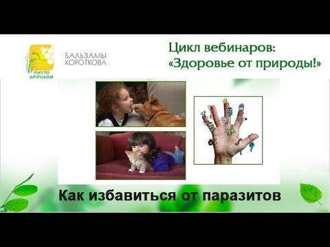 Травы от паразитов: народное лечение