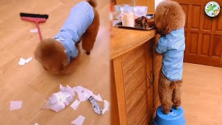 Baby Dogs - Cute and Funny Dog Videos Compilation #23 | Animaland