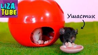 Крысята первый раз едят макароны картошку и мяско 🐭 Любимые питомцы 🌸 \ LizaTube