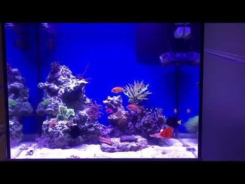 Reef tank lido 200