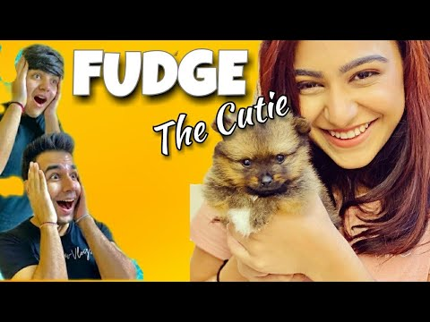 RIMORAV VLOGS - FUDGE | RI Vlogs New Member ft. Diksha ...