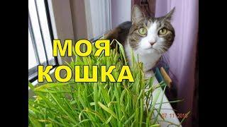 Самые смешные кошки. Моя Мурка. Приколы с котами.