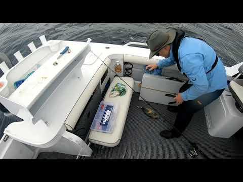 Sydney Offshore Fishing