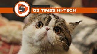 GS Times [HI-TECH] #11. Почему котики такие милые?