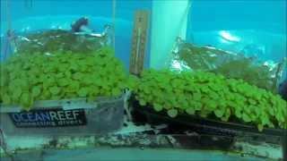 بالفيديو والصور.. زراعة الفراولة في حقول تحت الماء