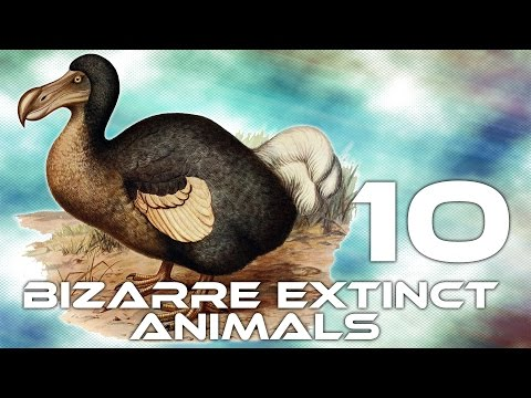 10 Bizarre Extinct Animals