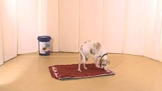 Дрессировка собак дома с нуля - команда место