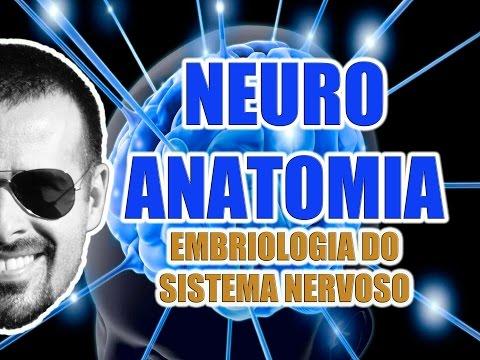 Vídeo Aula 069 - Neuroanatomia: Embriologia (origem) do Sistema Nervoso Central e Periférico
