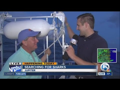 'Today' show goes hunting for sharks off Jupiter
