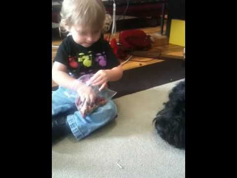 Baby Jude feeds Cecil the Bouvier