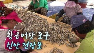 황금어장 포구, 신안 전장포 [어영차바다야]