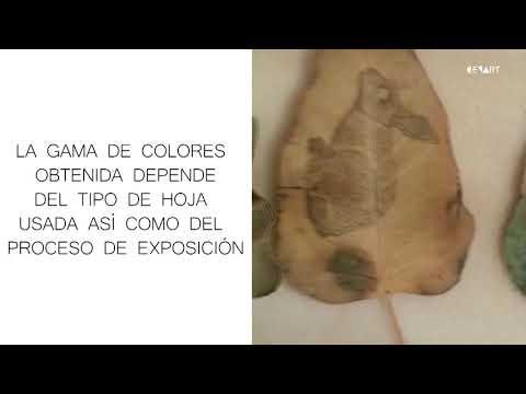 Revelado fotografico: Eliminar elementos molestos de nuestras fotografias from YouTube · Duration:  17 minutes 44 seconds