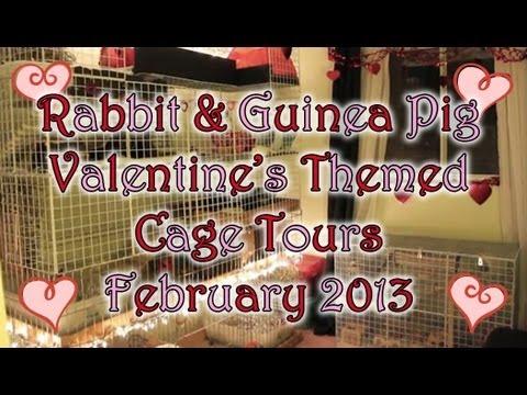 BudgetBunny: Valentine's Rabbit & Guinea Pig Cage Tours February 2013