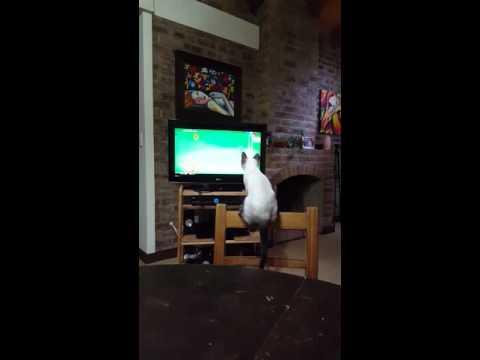 Lo que sea por mirar la tele!