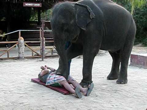 elephant handjob