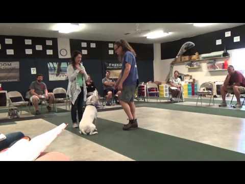 Dog Jumping, How To Dog Training