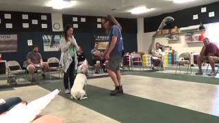 Dog Jumping, How To Dog Training