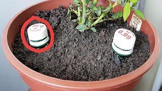 Enterre 2 garrafas na planta e veja o que acontece