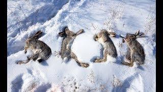 Охота на зайца троплением 2018 год