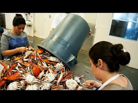 Blue Crab Catch And Processing - Canned Crab Meat Factory - Crab Meat Production Line