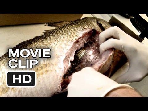 The Bay Movie CLIP - The Culprit (2012) - Horror Movie HD