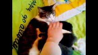 Спустя 2 недели котята♥(часть 2)