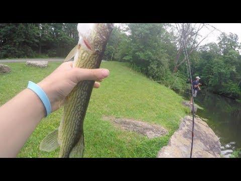MULTI-SPECIES FISHING in Northeast Pennsylvania!–Pennsylvania Pond Hopping Day 2