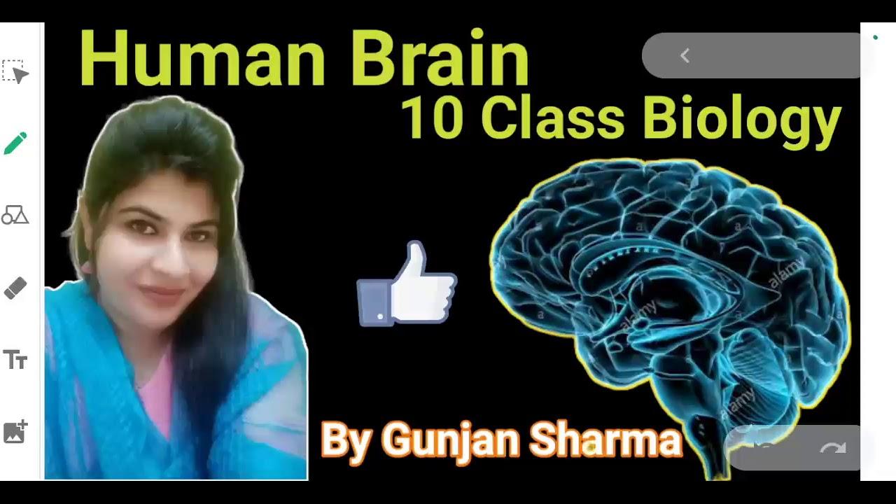 Human Brain (10 Class Biology) - YouTube