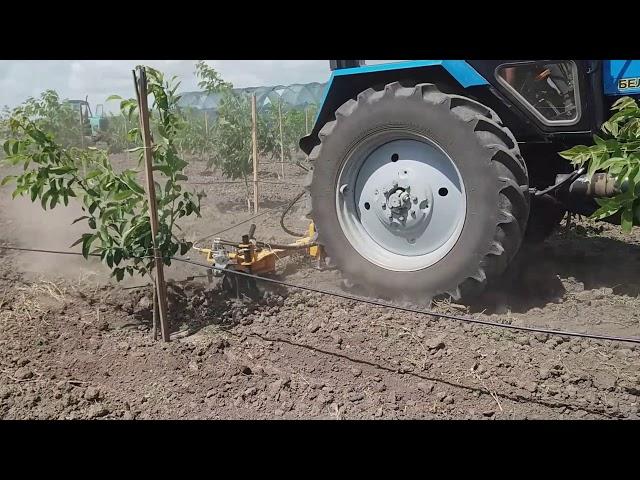 Боротьба із бур'яном у  горіховому саду: як  позбутися ручної праці.