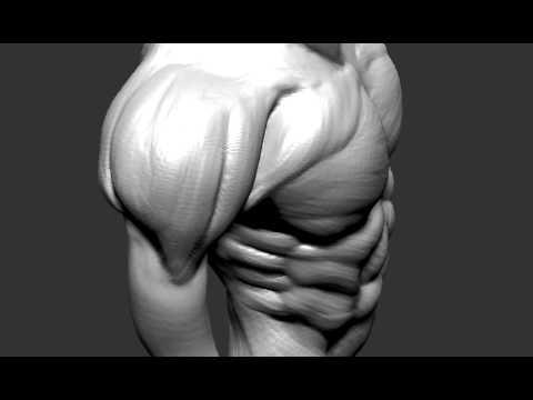 Speed Sculpting Study Male Torso Anatomy Youtube