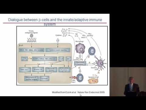 Decio L. Eizirik: BETA CELL APOPTOSIS IN TYPE 1 DIABETES