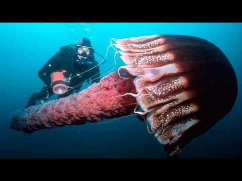 Самые опасные медузы!
