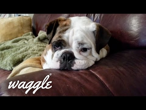 Pets are Life | Funniest Pet Videos