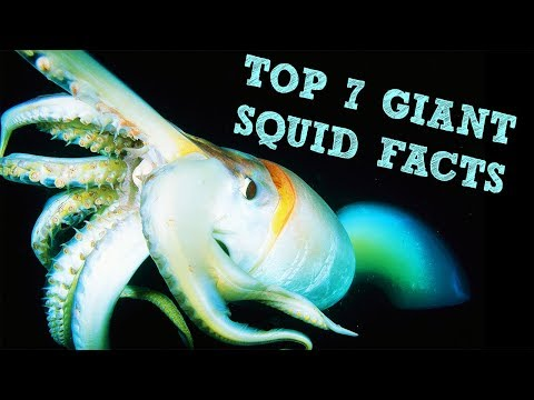 Animal Face Off: Sperm Whale vs giant squid | Doovi