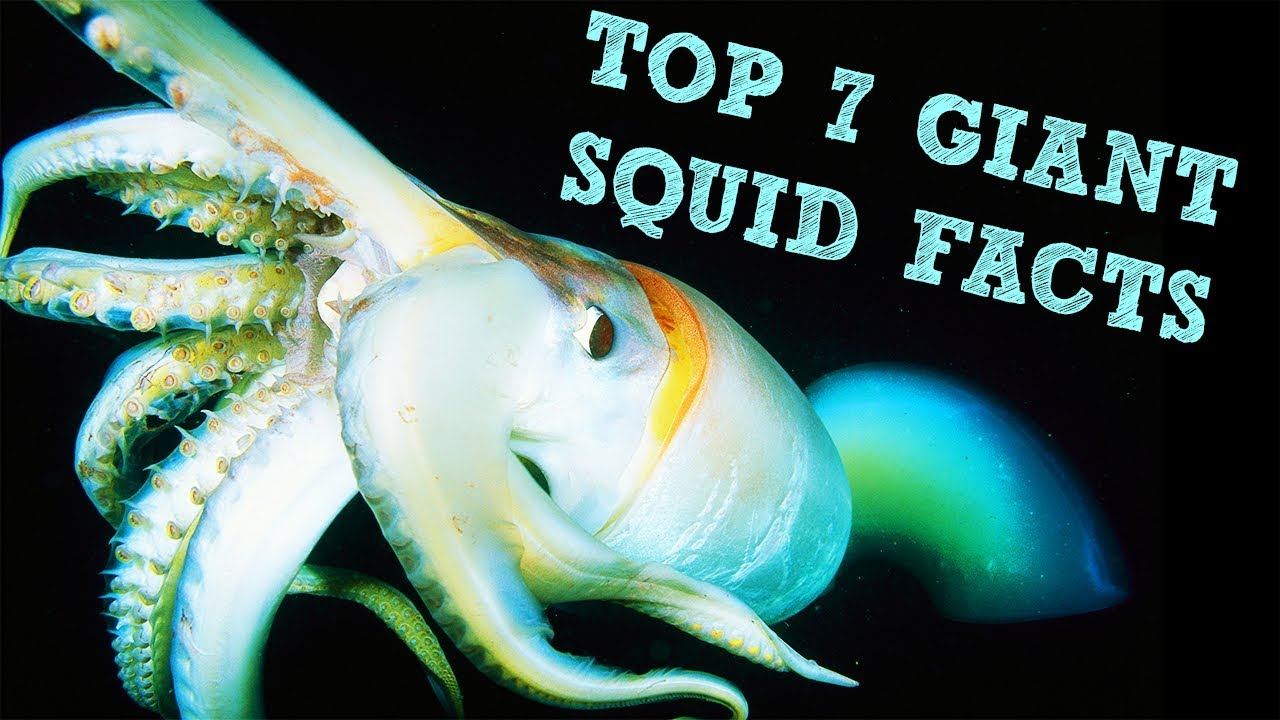 Top 7 Giant Squid Facts - YouTube