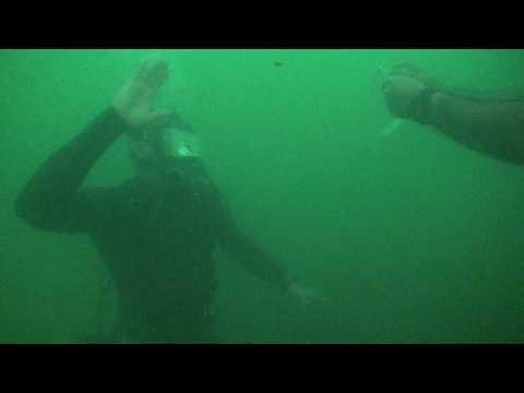 Pearl Harbor-NAVY Divers at the Arizona Memorial