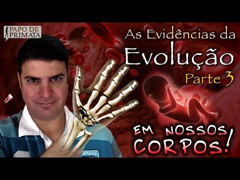 As Evidências da Evolução [3] - Em nossos corpos!