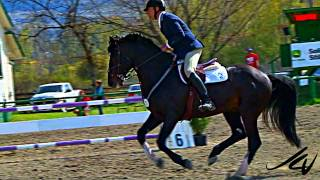 very slow motion horses jumping shows the beauty of this event