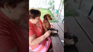Кормят собаку с ложки