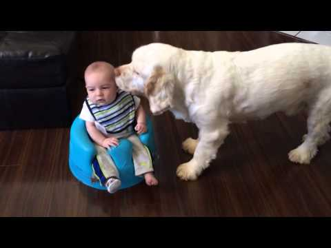 Clumber Spaniel and baby